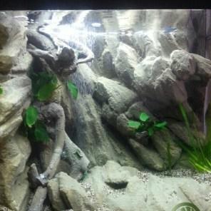 Aquarium Background Fabricant De Decors