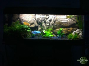 Decor de fond amazonien Aquarium 150