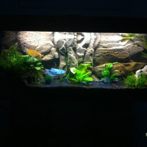 Decor de fond amazonien Aquarium 150