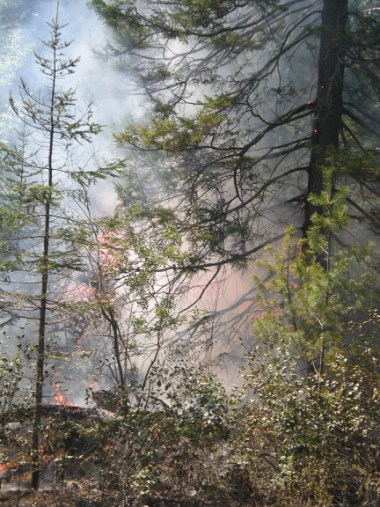 pagami fire in forest