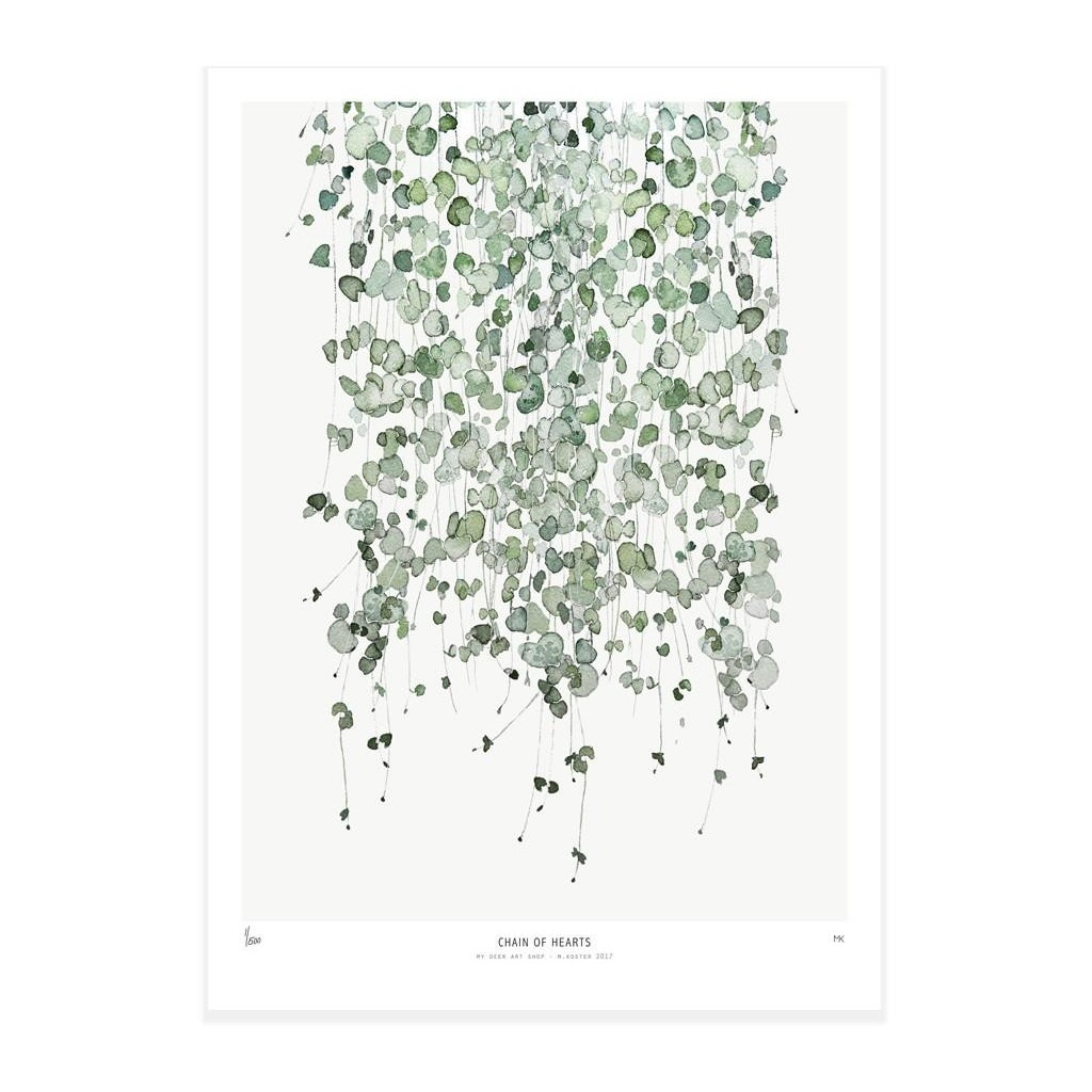 Poster 40x50 Poster Botanics 40x50 Chain Of Hearts Ceropegia Woodiii
