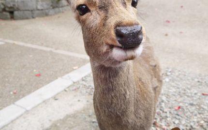奈良公園-46.jpg