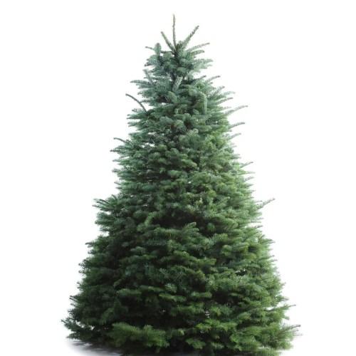 Medium Of Fresh Cut Christmas Trees