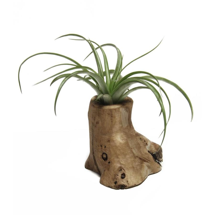 Wooden Windowsill Planter Air Plant In Teak Planter L21596 At Lowes