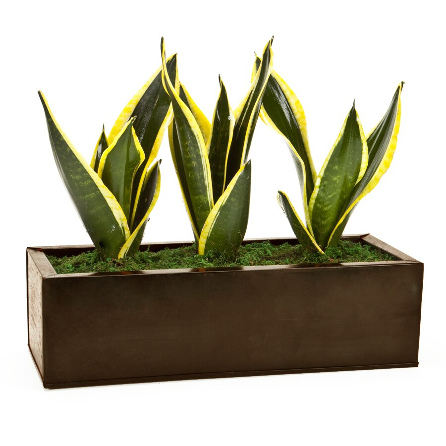 Table Top Zen Garden Exotic Angel Plants Dark Copper Zen Garden In 6 88 Quart Metal