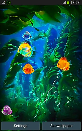 Descargar 3d Image Live Wallpaper Para Android Aquarium 3d By Pups Apps Para Android Baixar Gr 225 Tis O