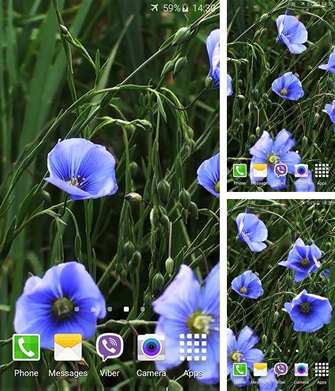 Clock Tower 3d Live Wallpaper Apk Descargar Jelly And Candy Para Android Gratis El Fondo De