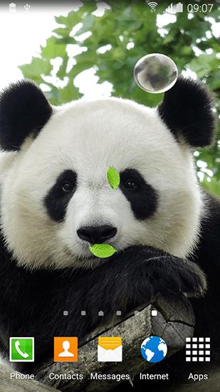 Cute Roses Wallpapers Download Cute Panda F 252 R Android Kostenlos Herunterladen Live