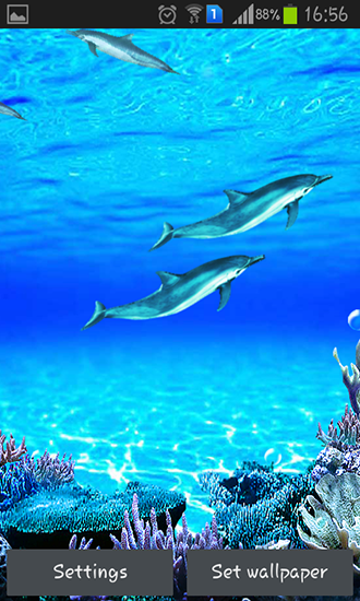 Dolphins sounds live wallpaper for Android. Dolphins sounds free download for tablet and phone.