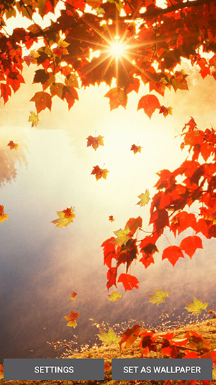 Falling Leaves Live Wallpaper Apk Falling Leaves Pour Android 224 T 233 L 233 Charger Gratuitement
