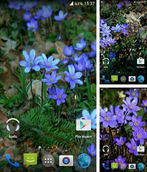 Magic Smoke 3d Live Wallpaper Apk Horses F 252 R Android Kostenlos Herunterladen Live Wallpaper