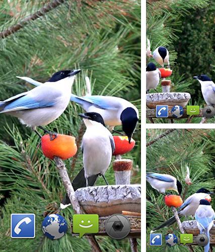 Falling Leaves Hd Live Wallpaper Apk Sharingan Para Android Baixar Gr 225 Tis O Papel De Parede