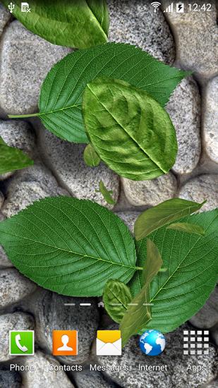 Falling Leaves Live Wallpaper Full Apk Leaves 3d Live Wallpaper For Android Leaves 3d Free