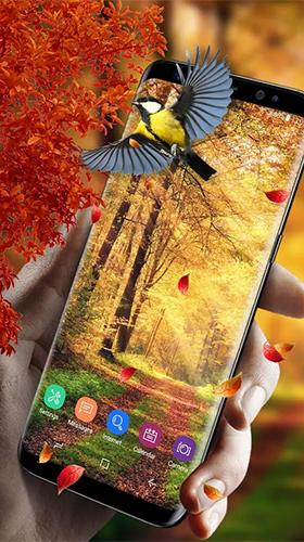 Falling Leaves Live Wallpaper Full Apk Picturesque Nature Live Wallpaper For Android Picturesque