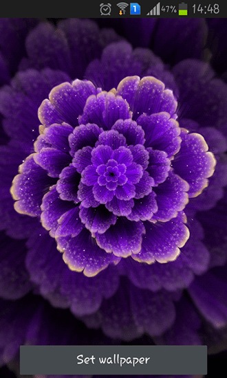 Magic Touch 3d Wallpaper Purple Flower Live Wallpaper For Android Purple Flower