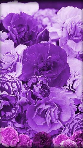 Hd Live Wallpaper For Tablet Purple Flowers Para Android Baixar Gr 225 Tis O Papel De