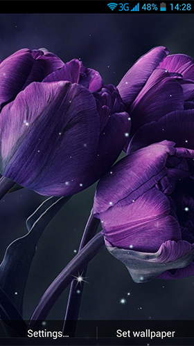 Tulips by Wallpaper qHD live wallpaper for Android. Tulips by Wallpaper qHD free download for ...