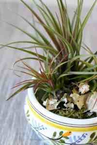 Pottery Air Plant Container | Modern Air Plants