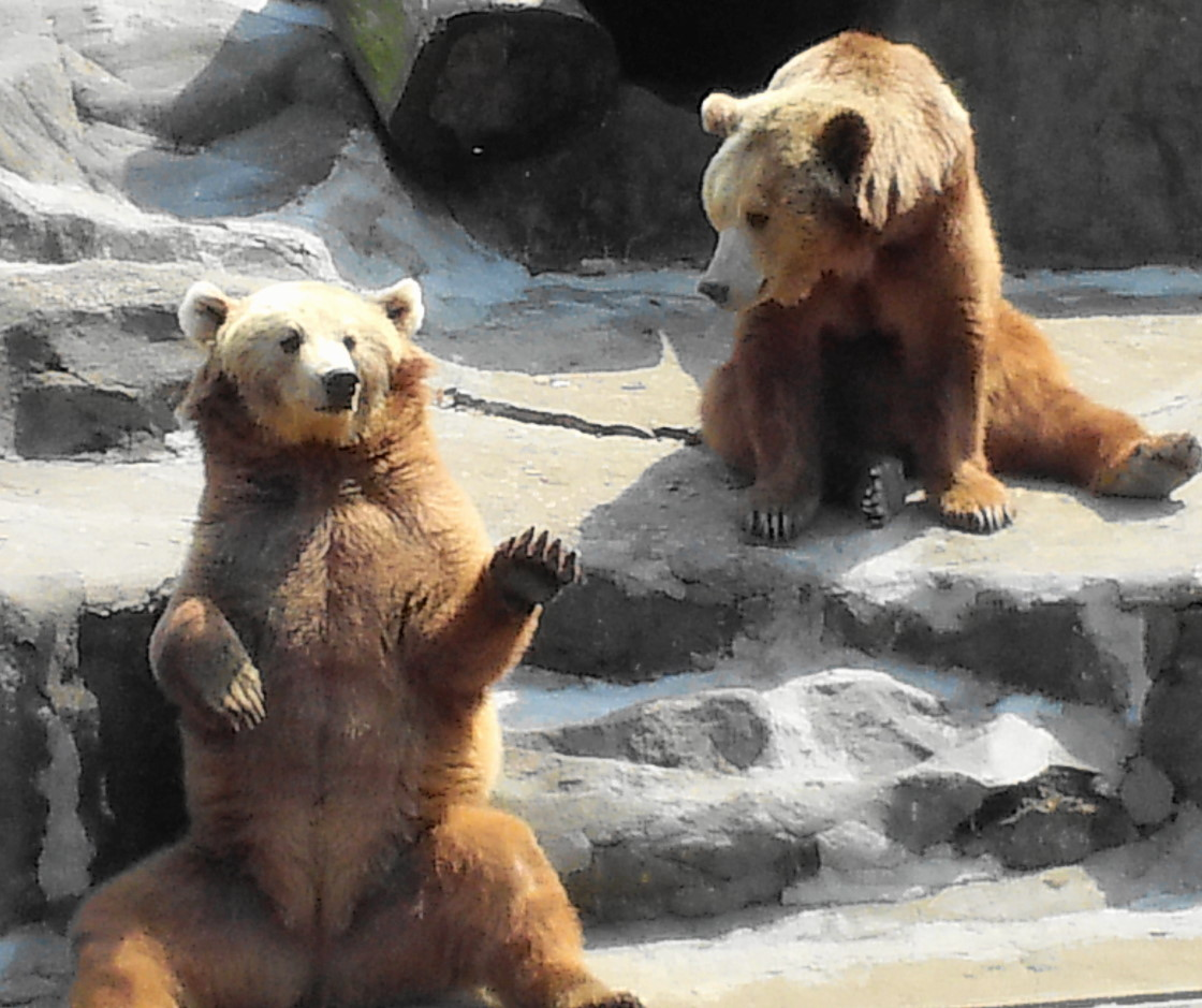 Free Wallpapers Of Cute Teddy Bears 1000 Images About Bears Waving On Pinterest