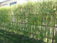 willow hedges on Pinterest | Living Fence, Living Willow ...