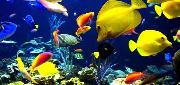 Coral Reef Wallpaper Hd أنواع الأسماك في العالم موضوع