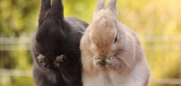 Cute Couples Wallpapers Full Hd معلومات عن الأرنب موضوع