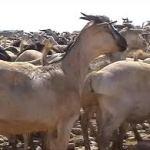ariga somalia