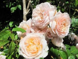 Amazing Things You May Have Never Known About ROSES
