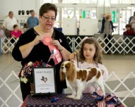 Blenheim Cavalier King Charles Spaniel with AKC Junior Handler