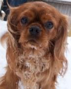 Bingley in the snow