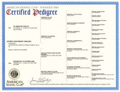 Darlin Pedigree_2 web