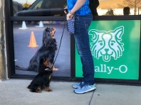 Kelly Lucky Dog Billboard