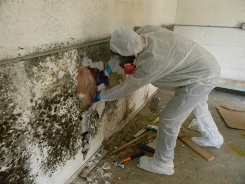 The Truth About Mold Removal And Mold Remediation | MoldmanUSA