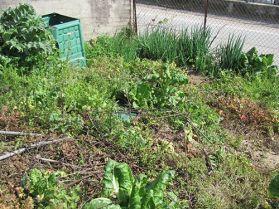 Weeds part 2