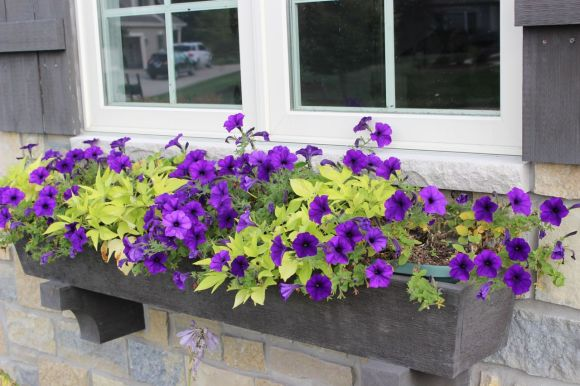 window box, pretty planter