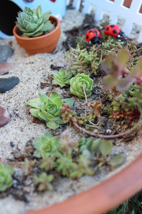 Medium Of Little Fairy Garden