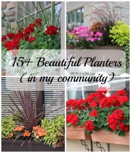 15+ Beautiful Planters in my Community! Great ideas for your container gardens!