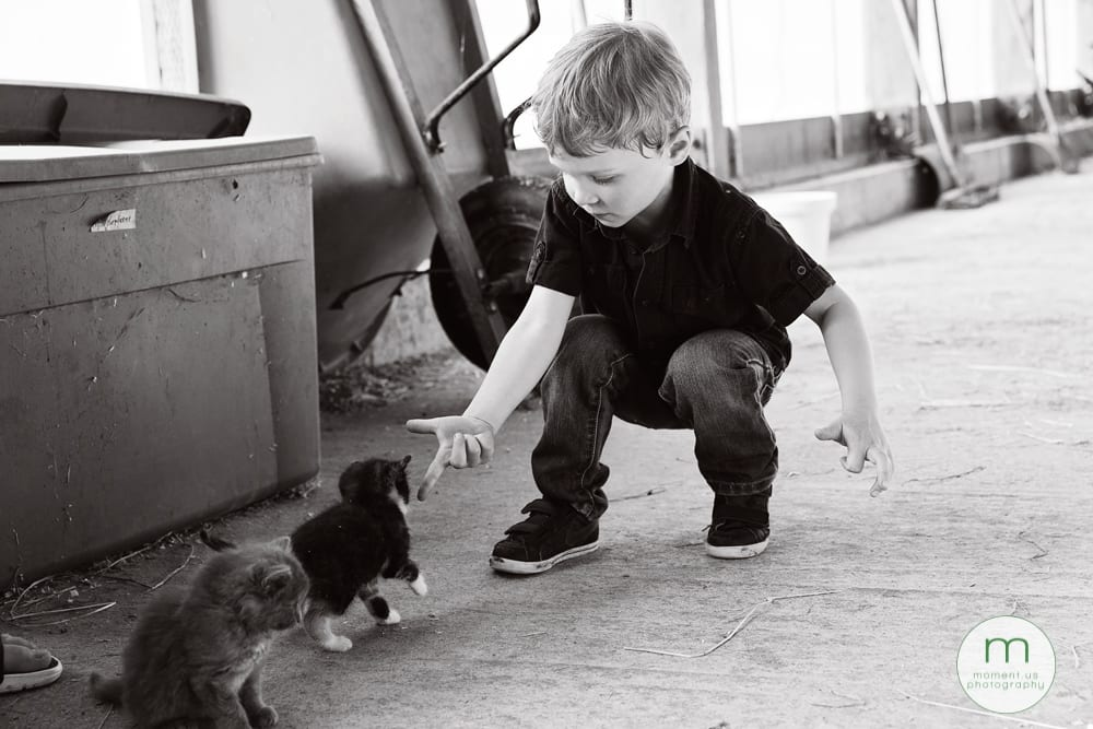 boy feeding kitten