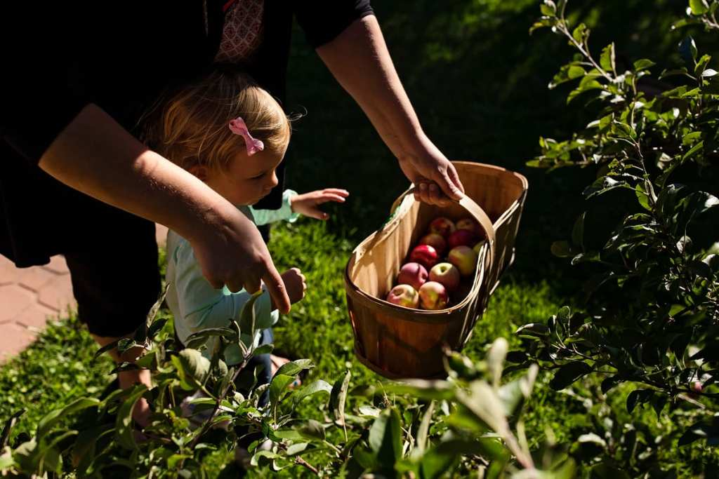 little girl picking apples with grandma