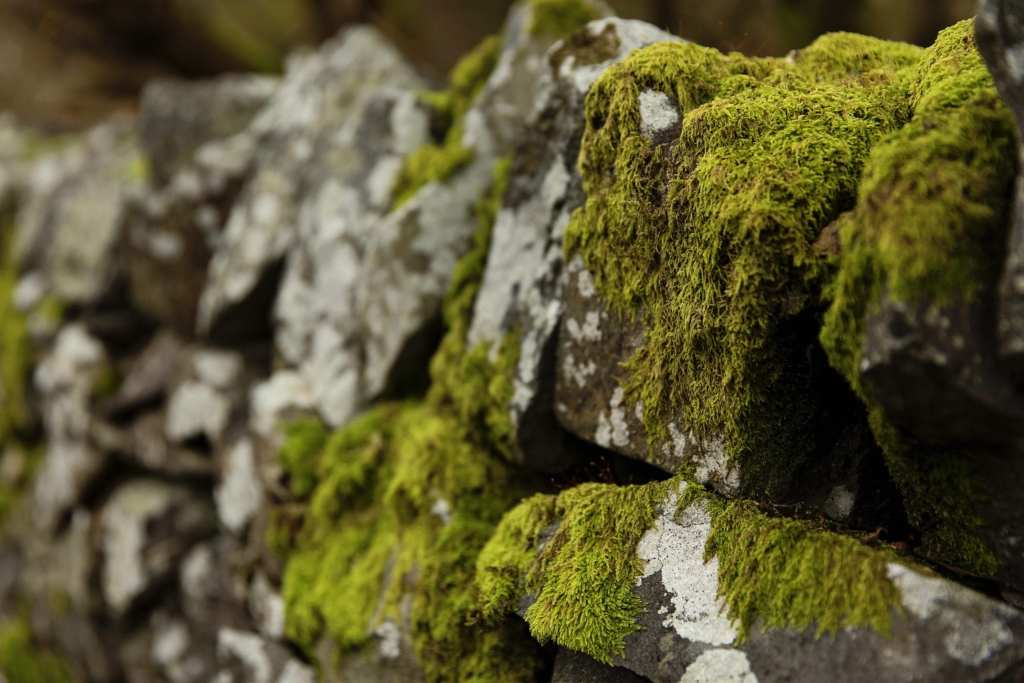 moss covered stone in Llanberis
