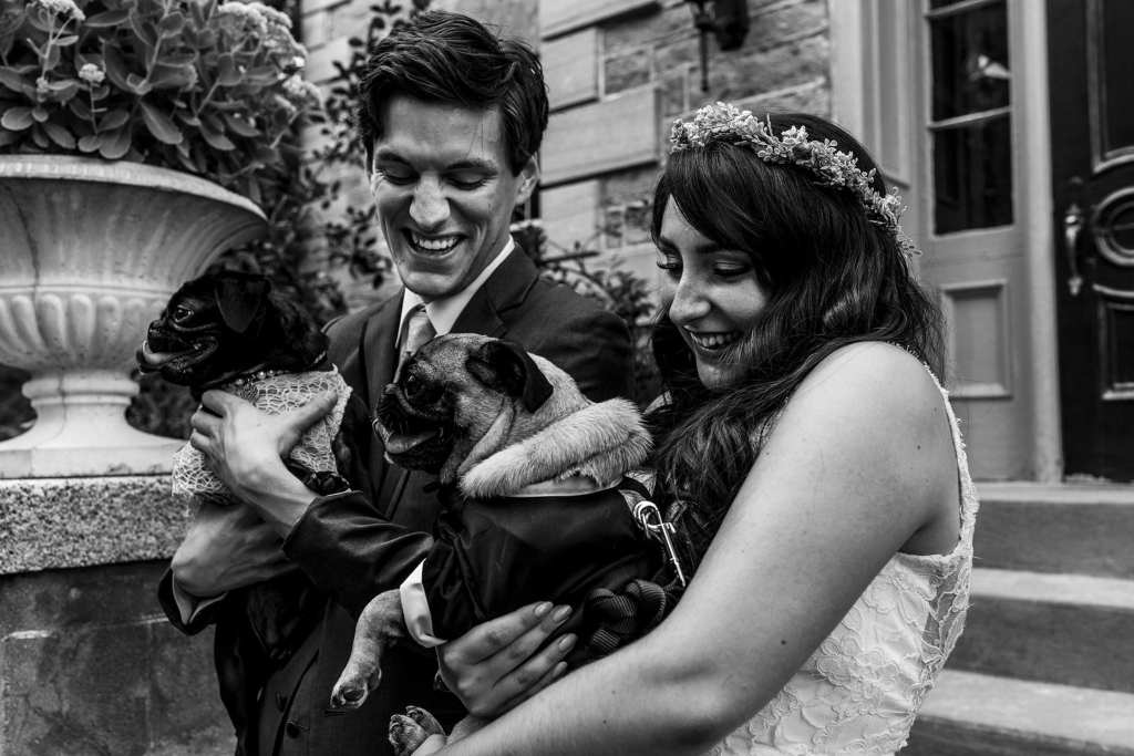 bride and groom laugh while holding two pugs