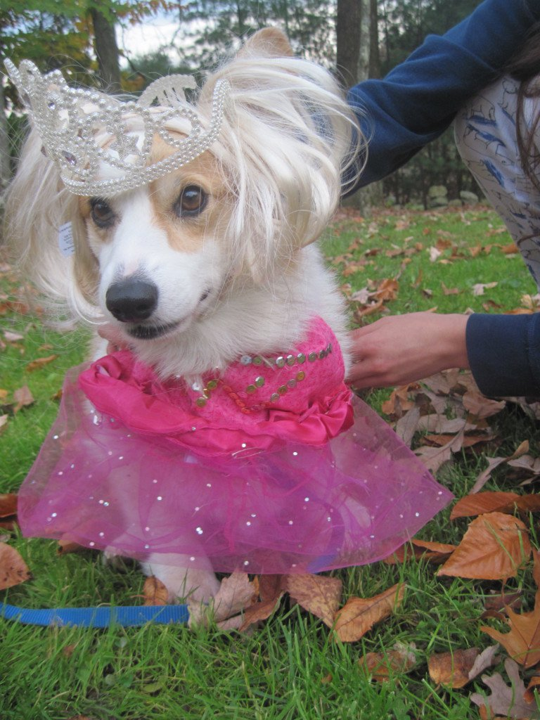Joolz Baby One Halloween Photo Contest Dress Up Your Dog For A Chance