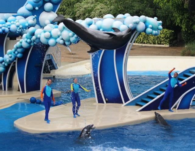 Dolphin-Days-Show-Sea-World-flying