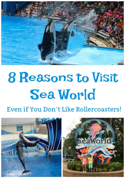 Tips-for-visiting-sea-world-with-kids
