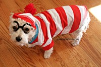 Where's Waldo Dog Costume and Childs Ghostbuster all from ...