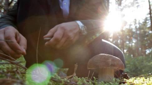 cueillir des champignons