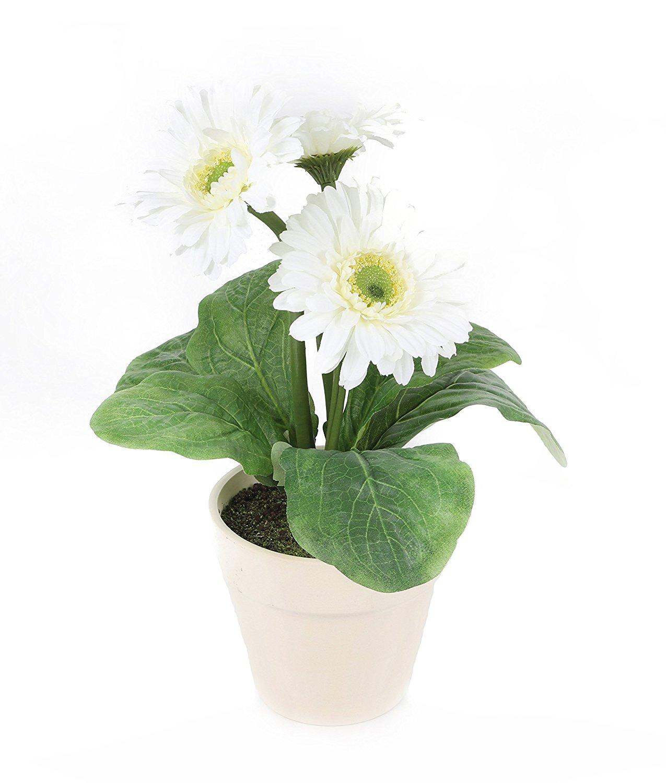 plante d polluante chambre b b sommeil 7 plantes mettre dans sa chambre pour mieux dormir. Black Bedroom Furniture Sets. Home Design Ideas