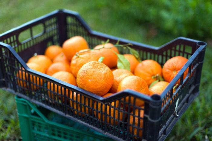 bitter-orange-marmalade-5