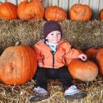 The cutest pumpkin peterleymanorfarm today LittleMROak