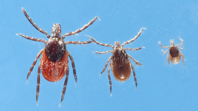 The Most Common Types of Ticks You Need to Watch out For